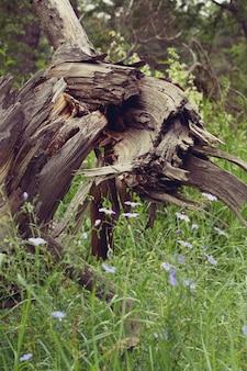 Oude houten winkelhaak in het bos dichtbij, filter,