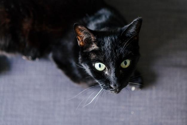 Oude kat met een bang expressie in het huis
