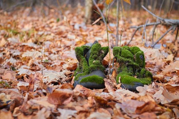 Oude laarzen bedekt met mos in het herfstbos