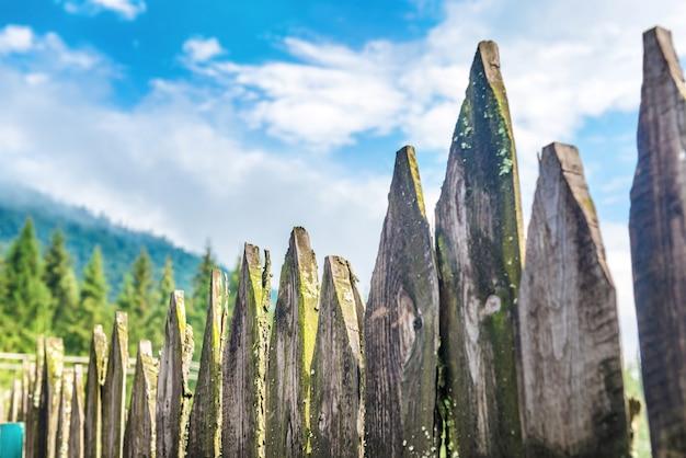 Oude landhek met bos en blauwe lucht op de achtergrond
