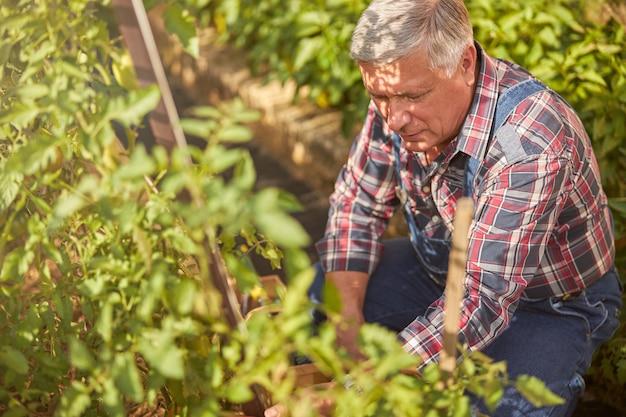 Oude man in jumpsuit geknield bij de planten in zijn tuin