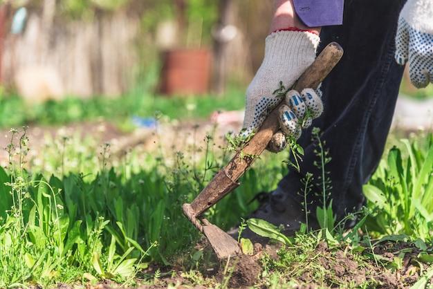 Oude man ontwortelt schoffel onkruid in zijn tuin