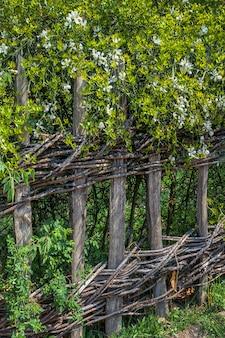 Oude rieten hek