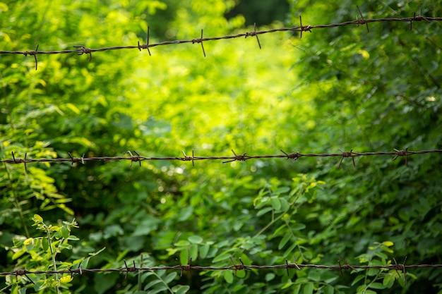 Oude roestige prikkeldraadomheining in het natuurpark voor het concept van onafhankelijkheid en grens.