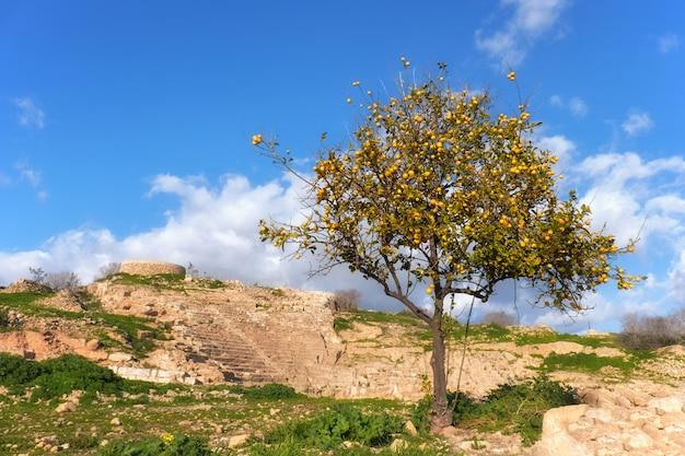 Oude ruïnes in het archeologische park van kato paphos in cyprus