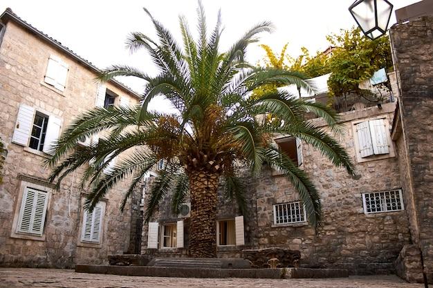 Oude stad budva montenegro, we zien een huis en een hoge palm