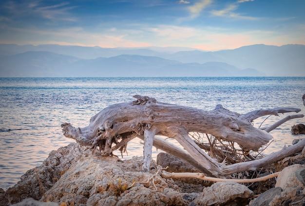 Oude stam gedragen door de zee