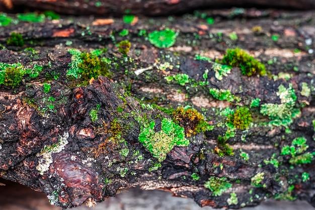 Oude stapel met mos en brandhout