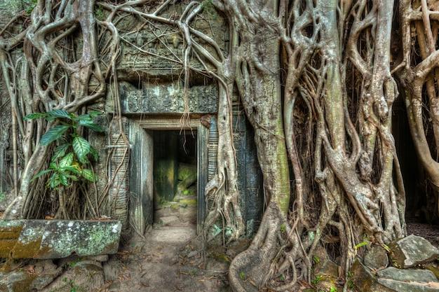 Oude stenen deur en boomwortels, ta prohm tempel, angkor, camb