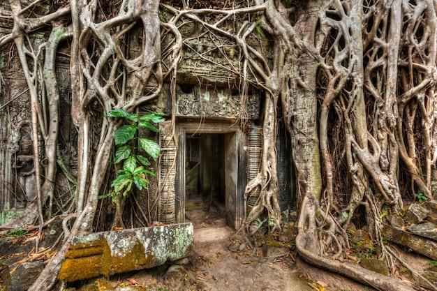 Oude stenen deur en boomwortels, ta prohm tempel, angkor