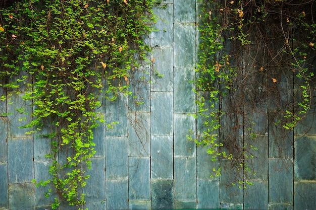 Oude stenen muur met groene klimop bij ondergrondse kruising bij fort canning park, singapore