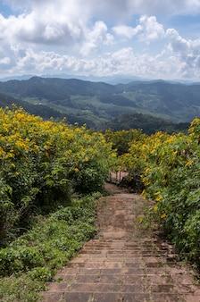 Oude stenen trap op het gebied van de boom goudsbloem (mexicaanse zonnebloem).