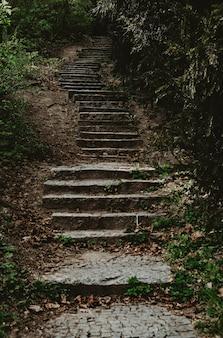 Oude stenen trappen in mysterieuze donkere bos