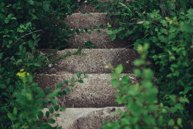 Oude stenen verlaten trappen met groene bladeren