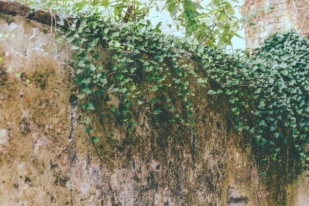 Oude stevige betonnen muur verstrengeld met klimplanten, een fragment van de hemel.