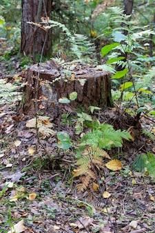 Oude stomp begroeid met mos in het herfstbos