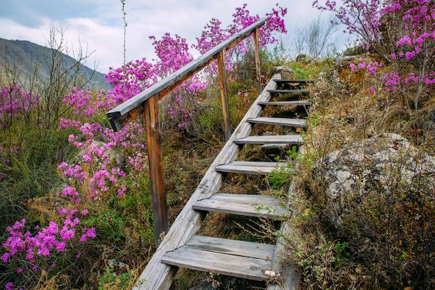 Oude trap met houten trap stijgt naar een kleine heuvel