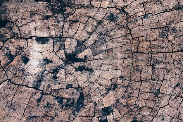 Oude van de de textuur backgroud houten aard van de boomstomp de lijstbovenkant