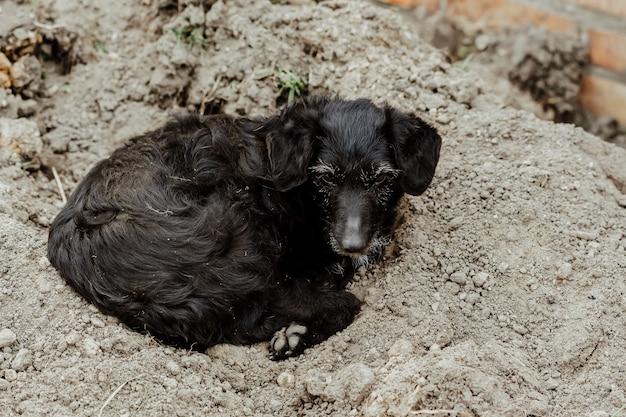 Oude verdwaalde hond die op de grond ligt