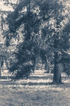 Oude vintage foto bospark verlaat wegbomen
