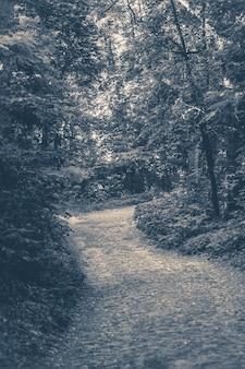 Oude vintage foto. een pad in een loofbospark in de zomer