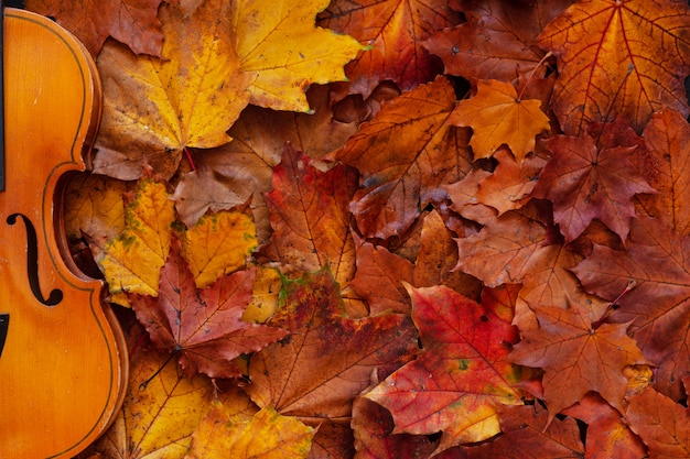 Oude viool op gele de herfstachtergrond van esdoornbladeren.