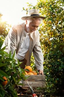 Oudere man in sinaasappelbomen plantage