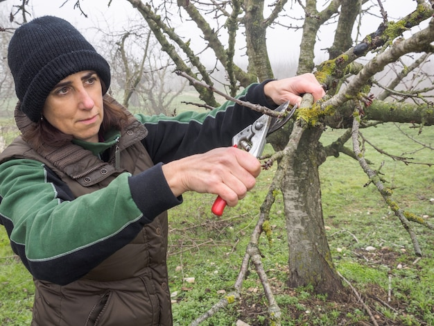 Oudere vrouw met wollen muts snoeien fruitbomen met schaar op een mistige dag