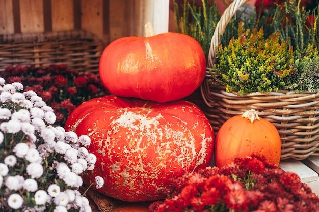 Outdoor herfst of herfst decoraties met grote pompoenen en verschillende bloemen.