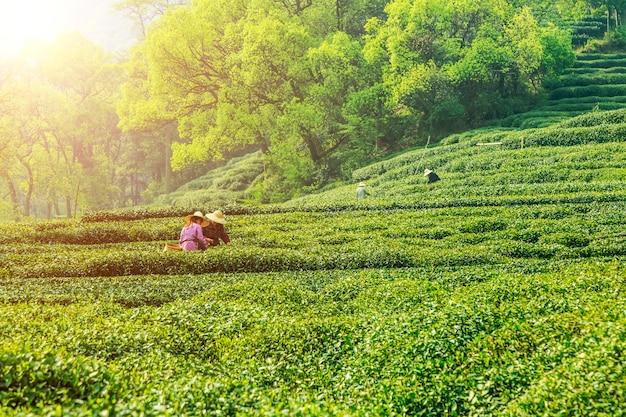 Outdoor plantages vrouw milieu seizoen Premium Foto