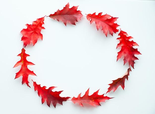 Ovaal frame gemaakt van levendige rode eikenbladeren, plat lag op witte achtergrond. abstracte herfst krans