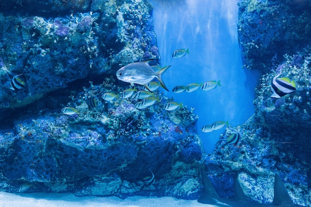 Over zeevis en zoetwatervis in aquarium