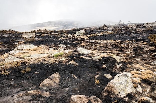 Overblijfselen van een bosbrand met verbrand struikgewas.