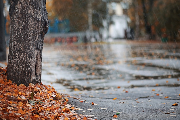 Overdag herfstregen in het park