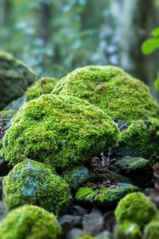 Overdekte rotsen met mos