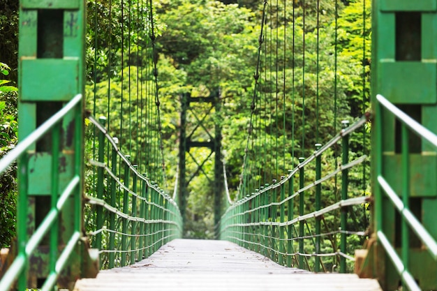 Overhandigen brug in groene jungle, costa rica, midden-amerika