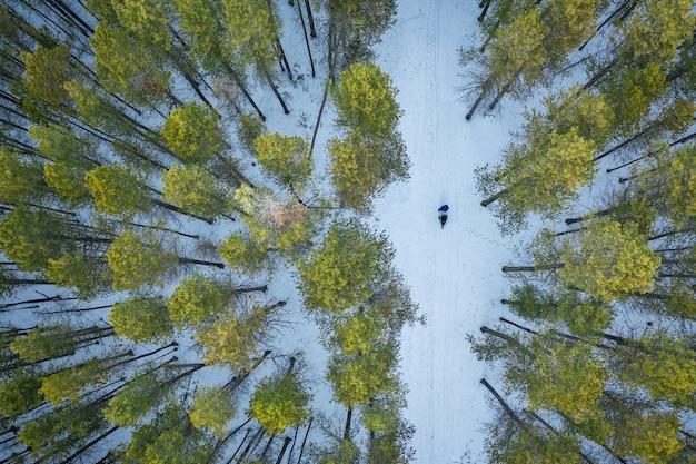 Overhead schot van een bos met hoge groene bomen in de winter