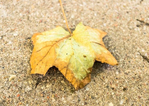 Overhead schot van een droog blad op de grond