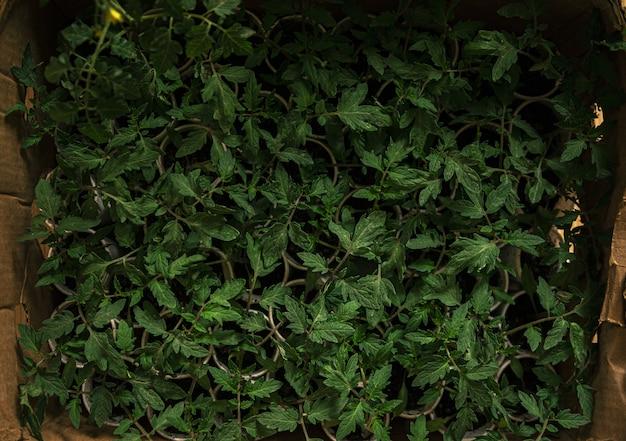 Overhead schot van gewone salie planten op kleine potten gegroepeerd in een doos