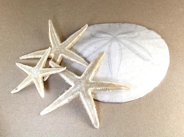 Overhead schot van zeesterren met een witte schelp in een bruin oppervlak