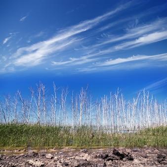 Overstroomd boslandschap met moeras en dode berkenbomen