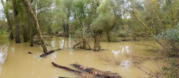 Overstroomd oeverbos met boomstammen die op hoog water drijven