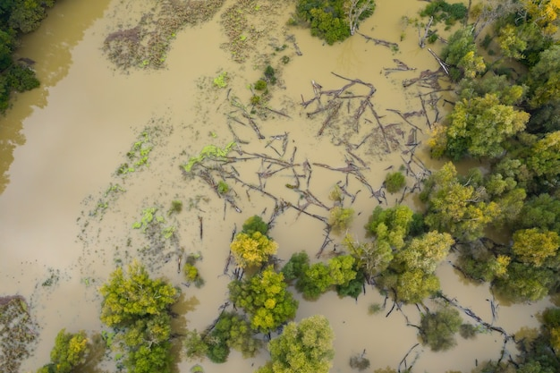 Overstroomd oeverbos met boomstammen drijvend op het wateroppervlak van bovenaf