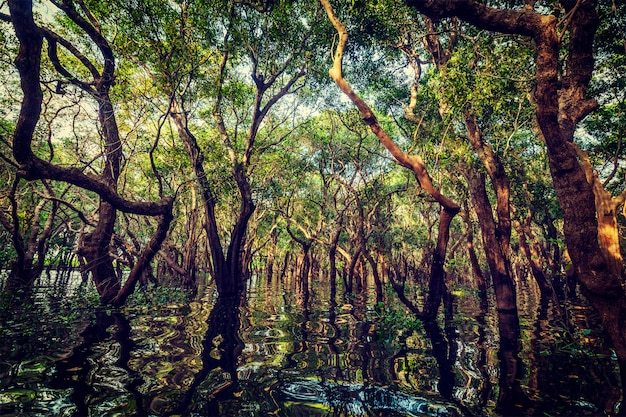 Overstroomde bomen in mangroveregenwoud