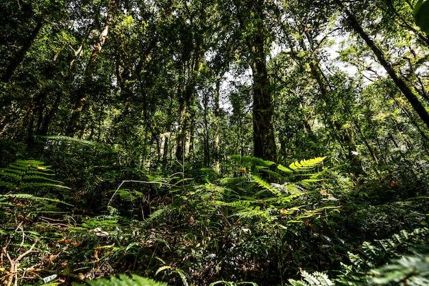 Overvloed tropische bosboom met groene bladeren in de berg.