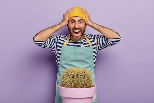 Overweldigd gefrustreerde mannelijke bloemist houdt de handen op het hoofd en staart geïrriteerd, schreeuwt emotioneel, moet cactus in een andere pot overplanten, heeft een paniekerige uitdrukking, draagt werkkleding