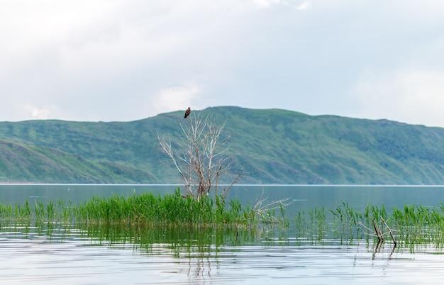 Overzees landschap met mountines en riet, blauwe hemel met wolken, cloudly zonder zon, kazachstan