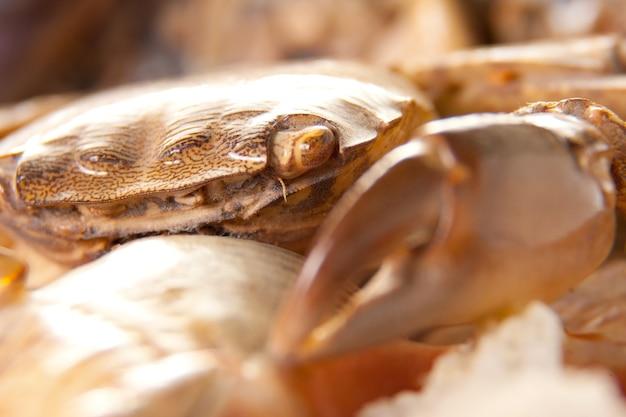 Overzeese krab op shell
