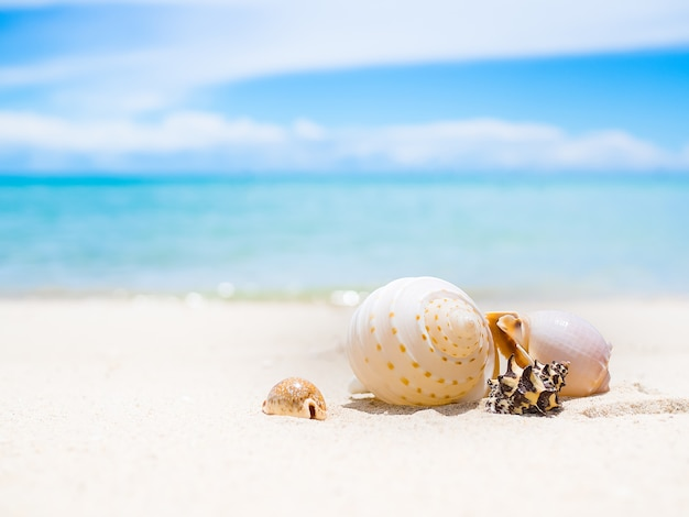 Overzeese shell op zandstrand met onduidelijk beeld van blauwe overzees en blauwe hemel. oceaan pattaya thailand. voor reizen zomervakantie.