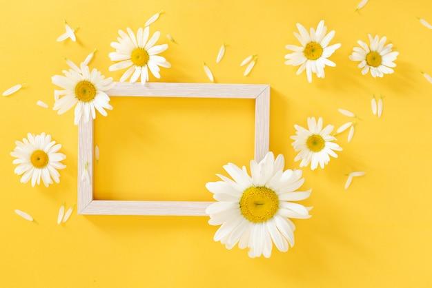 Oxeyemadeliefjes met een exemplaarruimte op een gele achtergrond